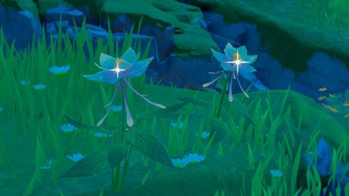 Глазурная лилия в Genshin Impact